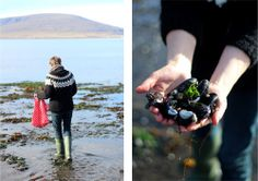 Mussels, In season now in Iceland..  Fresh mussels straight from the sea, best ever - The house by the sea