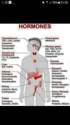 Pcos and the endocrine system nclex study guide pinterest more information ccuart Image collections