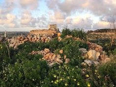Spring is near 😊💚🌼🍃 #malta #beautiful #weather #wild #flowers #yellow #view #scenery #clouds #sunset #greenery #nature #naturelover #naturelovers #naturephotography #travel #travelgram #travelphotography #spring2017 #flowerstagram #nofilter #mothernature #earth #peaceful #photographer #photography #wanderlust #cloudporn #natgeo #landscape by vanessasciberras. scenery #travelphotography #earth #view #spring2017 #yellow #wild #flowers #natgeo #clouds #malta #travelgram #travel #weather…