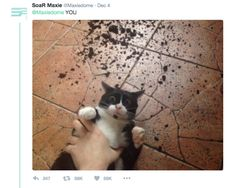 The 30 Most Important Cats Of 2016