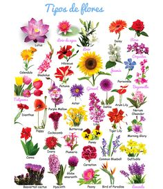 Diferentes Tipos De Flores Y Sus Nombres 1 Esther De Bernabe