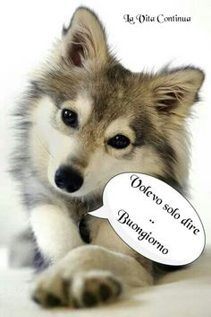 Good Morning Good Night, Day For Night, Good Morning Quotes, Italian Memes, Cat Wallpaper, Animal Kingdom, Animals And Pets, Cute Cats, Decir No