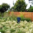 debora carl landscape design - contemporary - landscape - san diego - debora carl landscape design