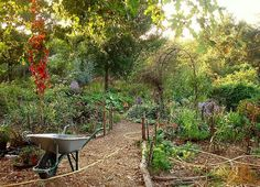 permaculture - love the way this edible garden blends in with the surrounding landscape.