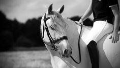 Razas de caballos: el caballo andaluz.