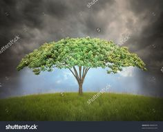 Umbrella shaped tree - environmental protection concept