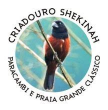 Criadouro Shekinah - Rio de Janeiro/RJ - criadouroshekinah.blogspot.com.br
