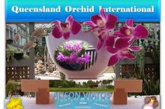 Promoting diverse interchange of sciences, arts, ideas and cultures pertaining to orchids via dynamic, interactive formats with an international horizon. Growing Orchids, Bali, Wordpress, Joy, Plants, Planters, Plant