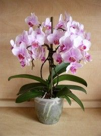Gerbera, Garden, Google, Flower Arrangements, Plants, Bonito, Garten, Lawn And Garden, Gardens