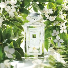 Limited edition Jo Malone™ Osmanthus Blossom Cologne