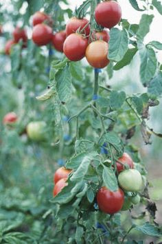 Vegetable Gardening for Beginners: Advice on plot size, which vegetables to grow, and other vegetable garden planning tips from The Old Farmers Almanac.