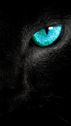 You are in the right place about animal wallpaper iphone nature Here we offer you the most beautiful Wild Animal Wallpaper, Wildlife Wallpaper, Lion Wallpaper, Black Wallpaper, Bedroom Wallpaper, Spring Wallpaper, Beautiful Cats, Animals Beautiful, Cute Animals