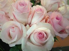- very light pink Light Pink Flowers, Cut Flowers, Pink Roses, Rose Wedding, Wedding Flowers, Wedding Stuff, Wholesale Florist, Rose Varieties, Sky Design