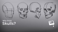 Why Draw Skulls? - Faces are hard to draw! One secret to learning how to draw faces is to first tackle the skull. For a variety of reasons, the skull is a great stand-in for a face. We're hard wired to be especially critical about human faces, and they can be frustrating to learn with. Instead, learning with the skull can help you internalize the basic proportions and masses before you move onto actual faces. ★ || www.facebook.com/CharacterDesignReferences  || ★