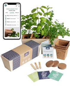 Urban Leaf has a really awesome gardening trio kit for growing Basil, Parsley, and Cilantro!