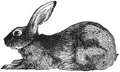 free printables - great rabbit for silhouette art.