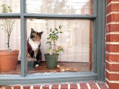 Bell Vista window cat