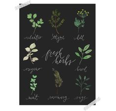 Spice and Herb Poster