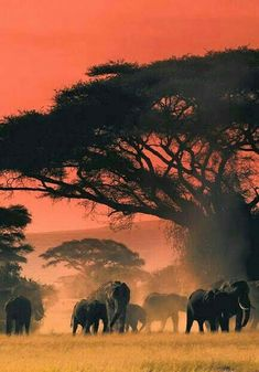 makes you enjoy your safari game African Elephant, African Animals, African Safari, Wildlife Photography, Animal Photography, Afrika Tattoos, African Sunset, Save The Elephants, Baby Elephants