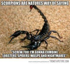 Damn scorpions…