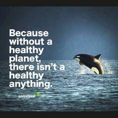 Killer whales do NOT belong in captivity!