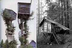 домики на дереве