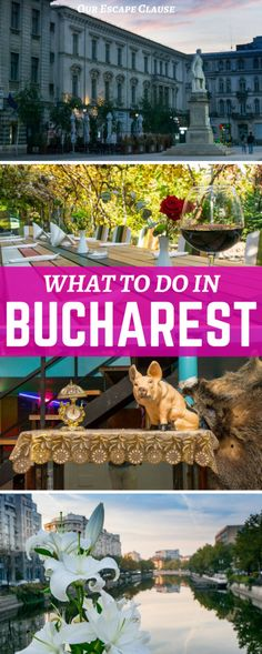 Check out the best things to do in Bucharest, what to eat, where to stay, and more! #Romania #Travel #Europe #Bucharest