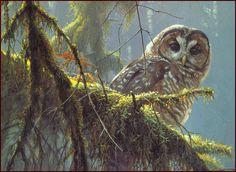 [LRS Animals In Art] Robert Bateman, Owl