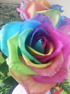 Rainbow roses my husband got me, I so badly want this as a shoulder tattoo.