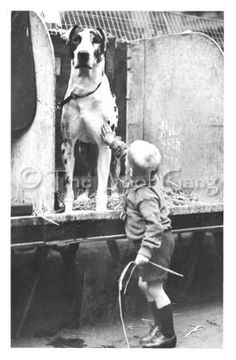 Historic photo notecard of a great dane with owner.