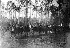 Florida Memory - Hauling logs with oxen and high-wheeler - Graceville, Florida