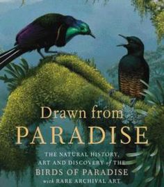 Drawn From Paradise: The Natural History Art And Discovery Of The Birds Of Paradise With Rare Archival Art PDF