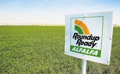 The Oregon county where voters in 2014 banned genetically modified crops has reached a peace agreement with growers of its largest existing genetically engineered crop.    U.S. Magistrate Judge Mark Clarke Tuesday approved terms of a settlement in the lawsuit challenging the Jackson County 2014 ballot measure banning genetically modified crops.    roundupralfalfa_406x250Two farm families that grow Roundup Ready Alfalfa® (RRA) sued Jackson County