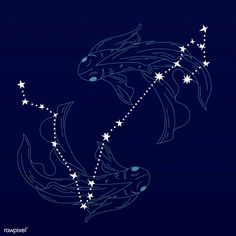 Astrology Pisces, Astrology Signs, Astrological Sign, Zodiac Signs, Capricorn Facts, Libra Horoscope, Solar System Poster, Constellation Tattoos, Cygnus Constellation