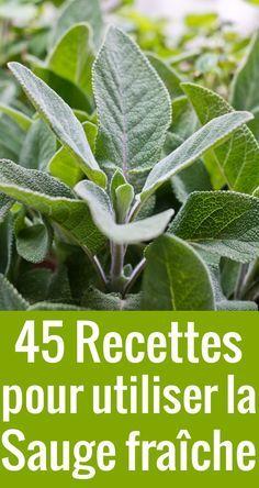 Vous avez de la sauge fraîche plein votre jardin ? Voici 45 délicieuses recettes à la sauge pour en faire bon usage.