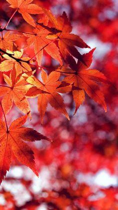Fall Leaf Red Mountain Bokeh #iPhone #6 #plus #wallpaper