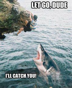 funny shark week catch you Funny Animal Pictures, Funny Animals, Cute Animals, Crazy Pictures, Baby Animals, Animal Quotes, Animal Memes, Misunderstood Shark, Tierischer Humor