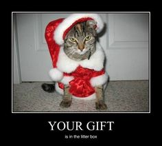 107 Best Christmas Animal Funnies Images Christmas Animals Funny