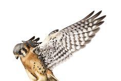 Kết quả tìm kiếm Google cho http://monomoda.com/wp-content/uploads/2010/12/andrew-zuckerman-bird-16.jpg