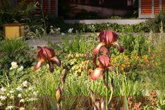 Mindful Living - RHS Chelsea Flower Show 2016