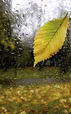 Tap the 🍂 to animate the gif. Photo Zen, Photo D Art, Walking In The Rain, Singing In The Rain, Surf Mar, Rain Gif, Foto Gif, I Love Rain, Rain Days
