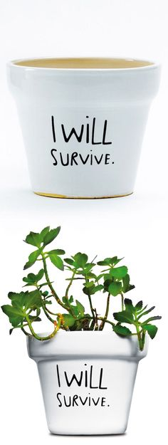 I Will Survive // plant pot... if my house plants could sing? This made me laugh out loud! #productdesign