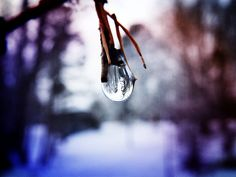 The World In A Drop by Cattura - Sometimes even little things remind us of the beauty in our lives, like the world we see in a tiny droplet Drop, World, Plants, Outdoor, Beauty, Outdoors, The World, Plant, Outdoor Games