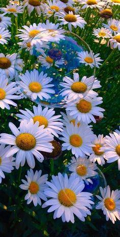 New flowers photography hippie nature 46 Ideas Daisy Wallpaper, Flower Iphone Wallpaper, Sunflower Wallpaper, Flower Background Wallpaper, Painting Wallpaper, Cute Wallpaper Backgrounds, Flower Backgrounds, Pretty Wallpapers, Wallpaper Desktop