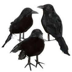 Black Feathered Small Halloween Crows - 3 Pc Black Birds Greenbrier Inc http://www.amazon.com/dp/B005KMOV44/ref=cm_sw_r_pi_dp_B11kub082H5ZT