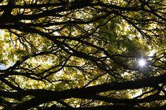 #Sunlight through the trees at #Edinburgh Royal Botanical Gardens #Scotland