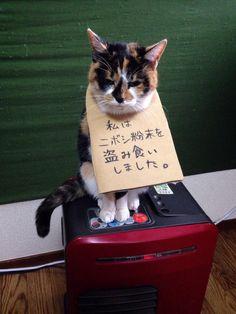 申し訳ございません(^人^)