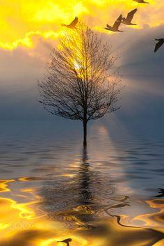 Dreaming by Pavlos Pavlou - Photo 147109737 - Nature Pictures, Cool Pictures, Beautiful Pictures, Beautiful Places, Dark Photography, Beautiful Sunrise, Science And Nature, Amazing Nature, Belle Photo