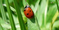 Finding Rare Ladybugs: A fun learning project