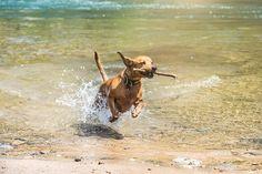 Slideshow landing page - KSLA News 12 Shreveport, Louisiana News Weather & Sports Boxer Beagle Mix, Dog Photo Contest, Best Dog Photos, National Puppy Day, Severe Weather, Dachshund, Best Dogs, Cute Puppies, Baton Rouge